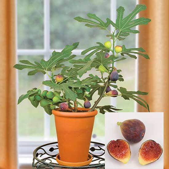 10-sorprendentes-plantas-para-cultivar-en-maceta-01