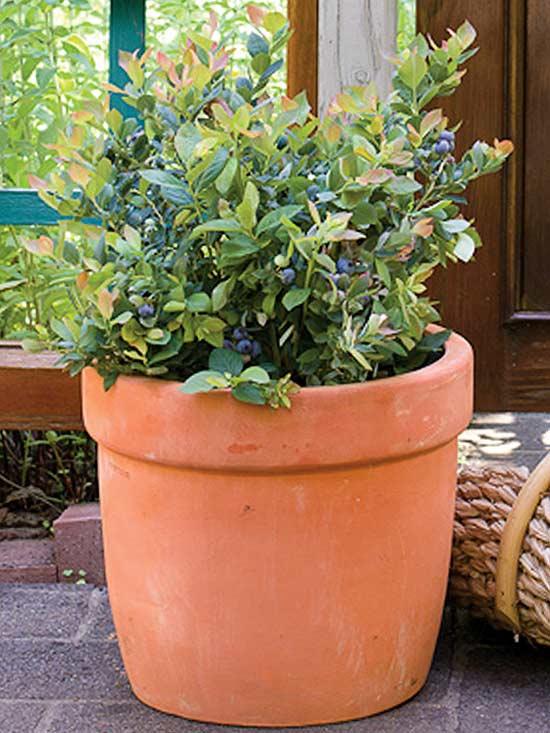 10 sorprendentes plantas para cultivar en maceta - Plantas para macetas exterior resistentes ...