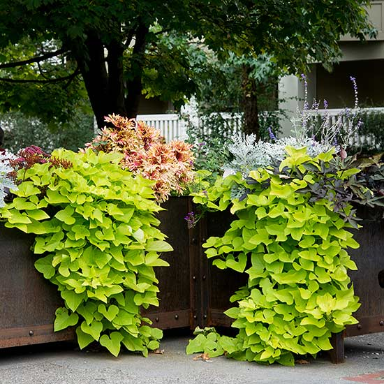 10 sorprendentes plantas para cultivar en maceta for Plantas en macetas