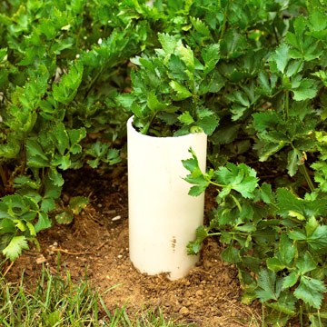 10-sorprendentes-plantas-para-cultivar-en-maceta-05