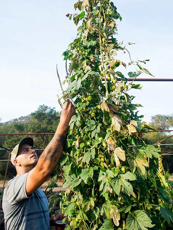 10-sorprendentes-plantas-para-cultivar-en-maceta-06