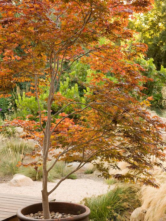 10-sorprendentes-plantas-para-cultivar-en-maceta-09