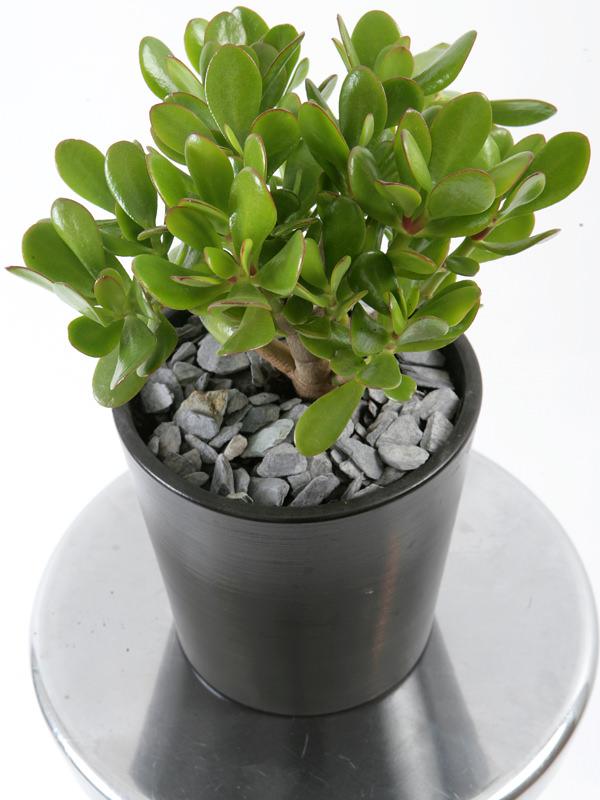 19 plantas de interior sin mantenimiento jardiner a for Fotos de plantas de interior