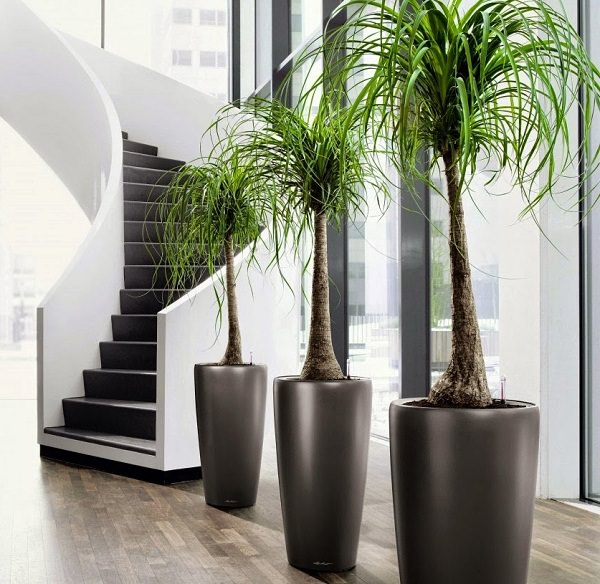 19 plantas de interior sin mantenimiento for Plantas decorativas de interior