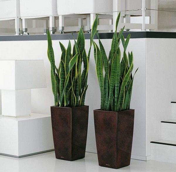 19 plantas de interior sin mantenimiento - Plantas para patios interiores ...