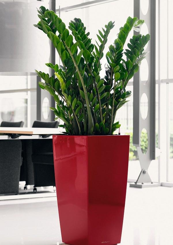 18 piante d appartamento che non richiedono manutenzione for Plantas de interior duraderas