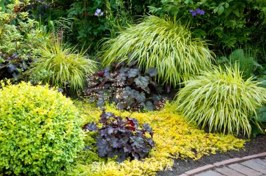 7-maravillosas-plantas-que-crecen-bajo-la-sombra-02