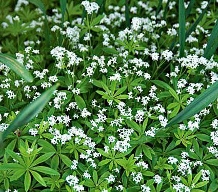 7-maravillosas-plantas-que-crecen-bajo-la-sombra-03