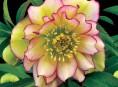 imagen 7 maravillosas plantas que crecen bajo la sombra