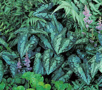 7-maravillosas-plantas-que-crecen-bajo-la-sombra-05