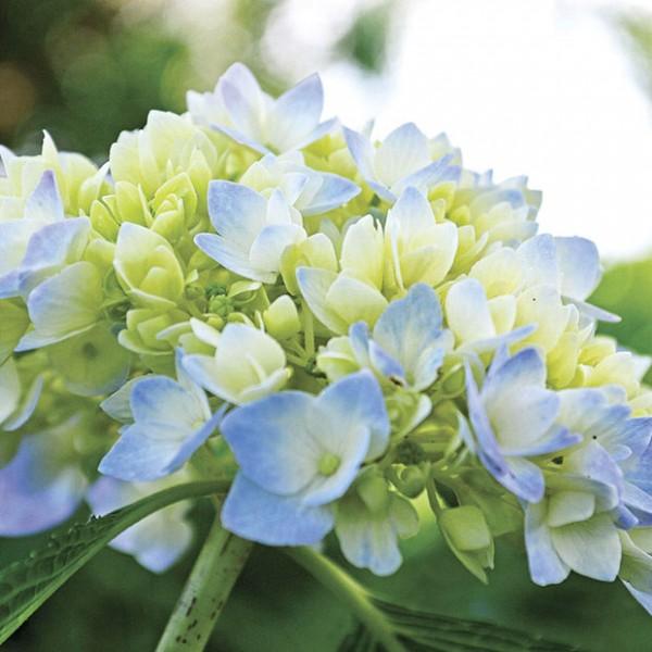 7-maravillosas-plantas-que-crecen-bajo-la-sombra-07