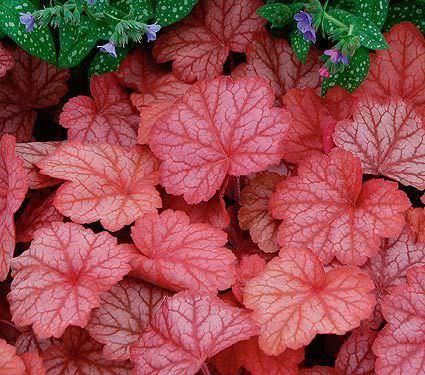 7-maravillosas-plantas-que-crecen-bajo-la-sombra-09