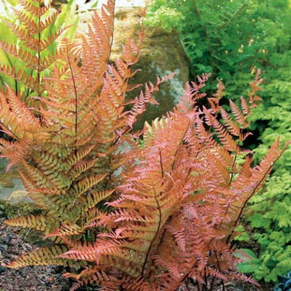 7-maravillosas-plantas-que-crecen-bajo-la-sombra-10