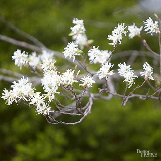 arbustos-para-cultivar-en-sombra-04
