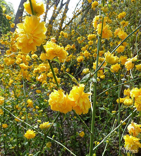 arbustos-para-cultivar-en-sombra-14
