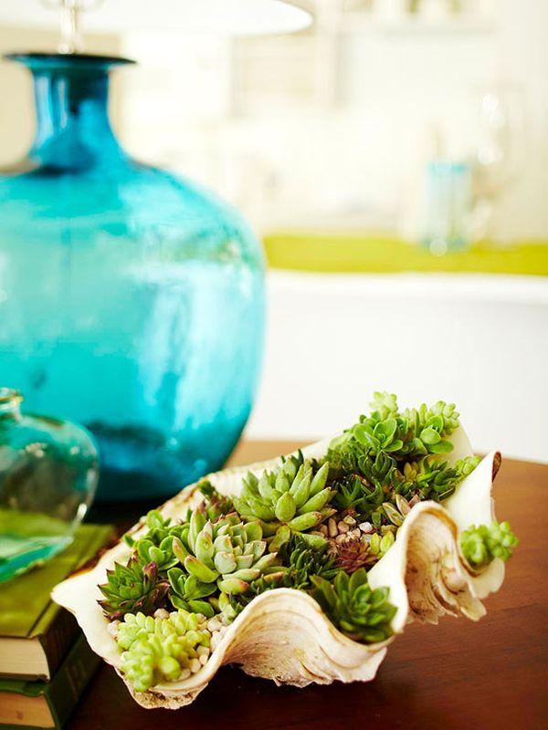 como-usar-conchas-de-moluscos-en-jardineria-01