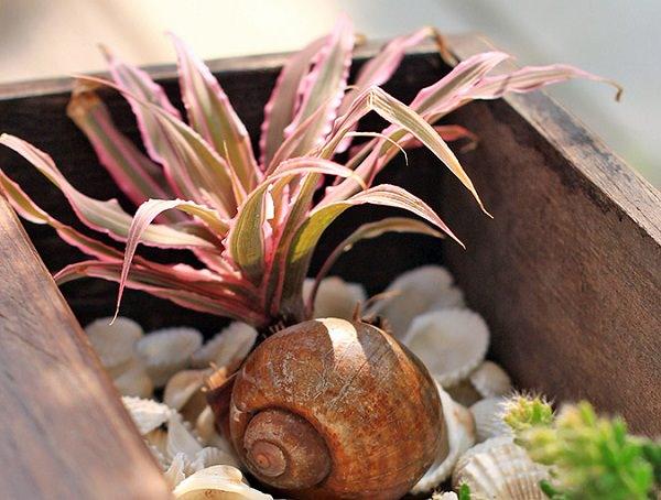 como-usar-conchas-de-moluscos-en-jardineria-02