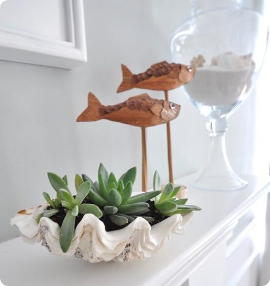 como-usar-conchas-de-moluscos-en-jardineria-03