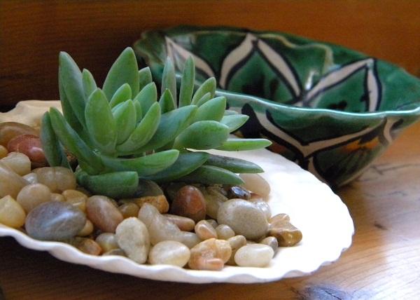 como-usar-conchas-de-moluscos-en-jardineria-04