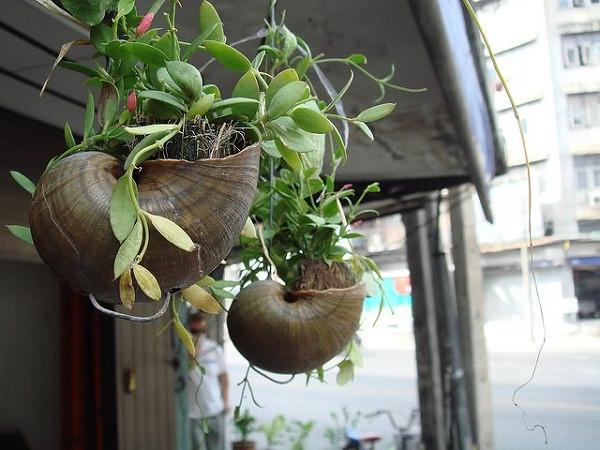 como-usar-conchas-de-moluscos-en-jardineria-05