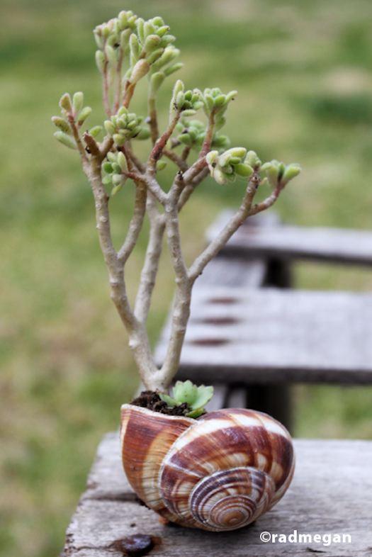 como-usar-conchas-de-moluscos-en-jardineria-06