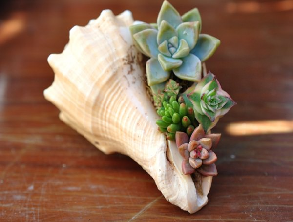 como-usar-conchas-de-moluscos-en-jardineria-07