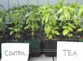 imagen Fácil truco para que tus plantas crezcan más rápido
