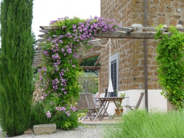 Las 19 mejores plantas para p rgolas for Arbol perenne para jardin