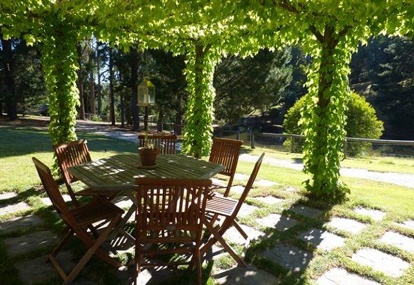 las-19-mejores-plantas-para-pergolas-11