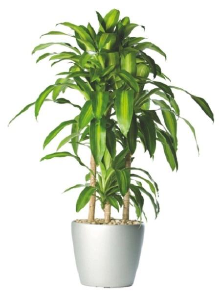 Las 18 mejores plantas grandes de interior for Plantas artificiales para interiores