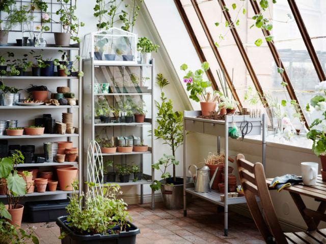 Las 18 Mejores Plantas Grandes De Interior