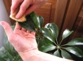 imagen Usos del jabón potásico en el jardín