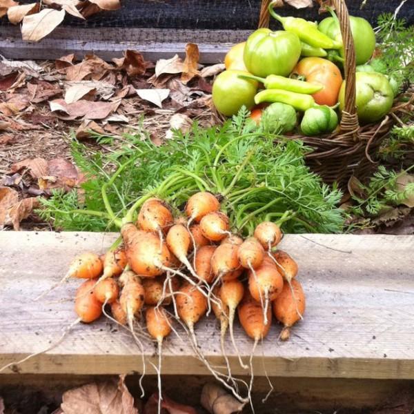 10-hortalizas-enanas-para-cultivar-en-maceta-04