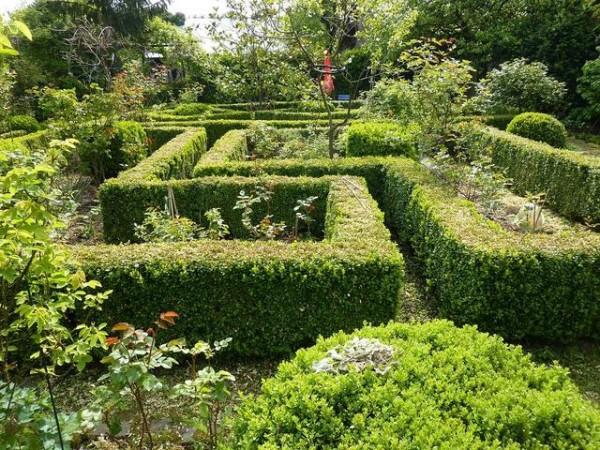 Arbustos gu a de jardiner a for Arbustos con flores para jardin