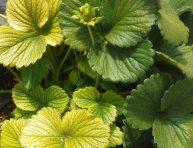 imagen Cuando las hojas de tus plantas se vuelven amarillas