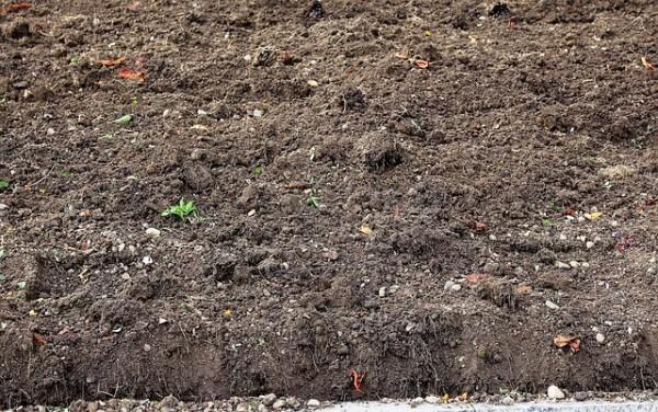 un-suelo-sano-para-un-jardin-sano-03
