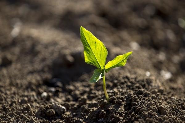 un-suelo-sano-para-un-jardin-sano-04