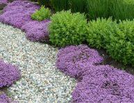 imagen 18 plantas cubresuelos con flor