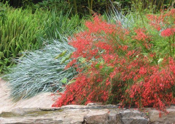 18-plantas-cubresuelos-con-flor-15