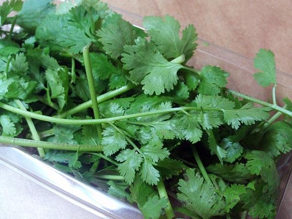 agrega-cilantro-a-tu-jardin-de-hierbas-domestico-04