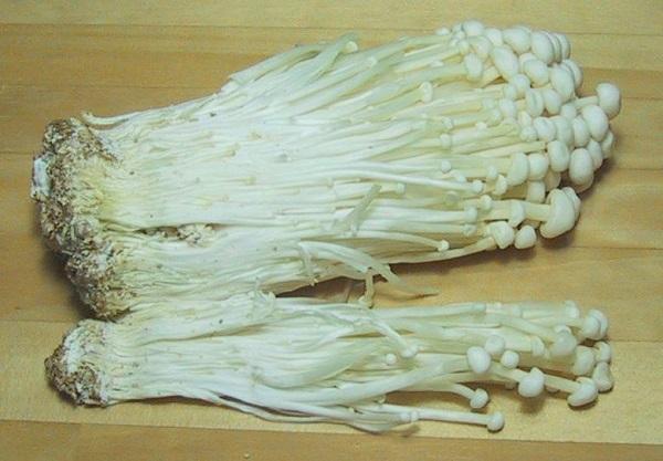 como-cultivar-setas-03