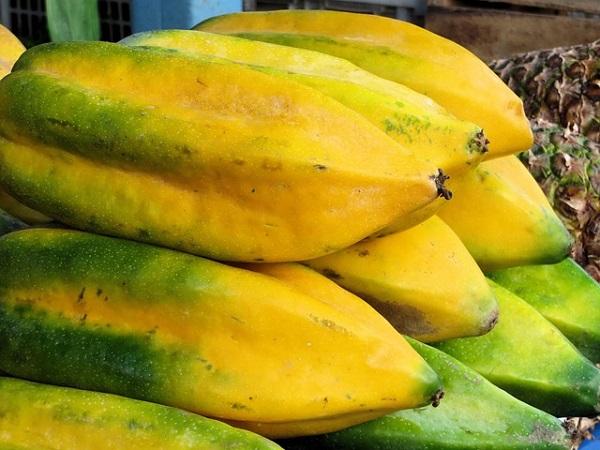 como-cultivar-un-papayo-en-tu-jardin-04