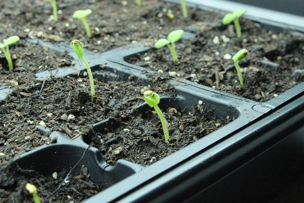 como-preparar-una-instalacion-para-cultivo-de-interior-01