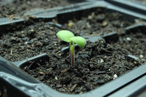como-preparar-una-instalacion-para-cultivo-de-interior-11