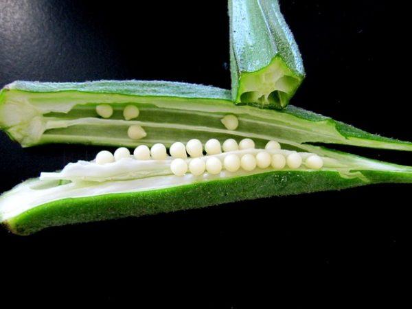 cultiva-ocra-en-maceta-04