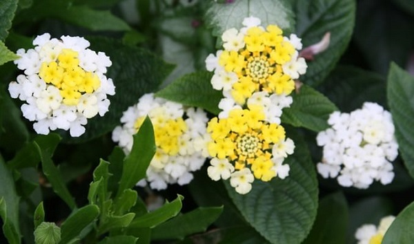 las mejores flores para cultivar a pleno sol - 1ª parte