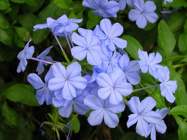las-mejores-flores-para-cultivar-en-maceta-a-pleno-sol-03