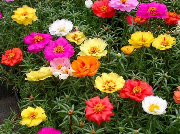 Las mejores flores para cultivar a pleno sol 1 parte for Plantas perennes exterior