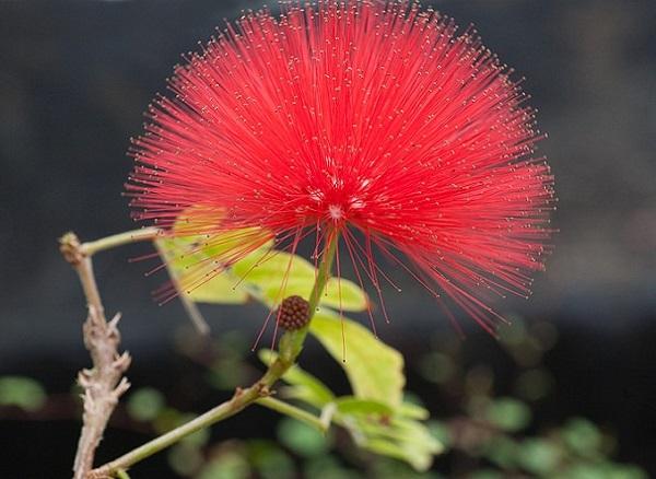 las-mejores-flores-para-cultivar-en-maceta-a-pleno-sol-08