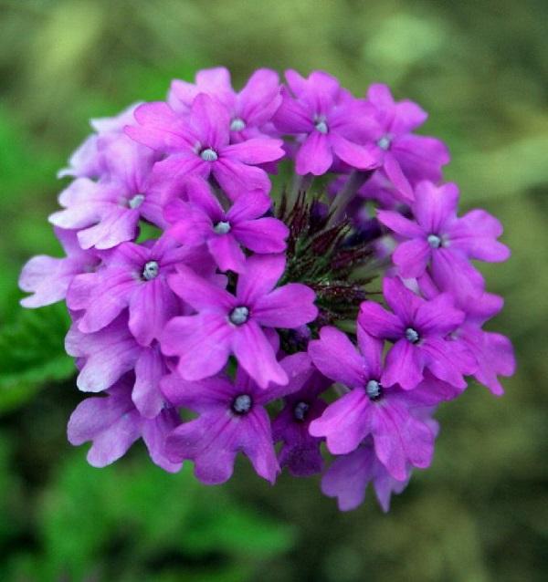 las-mejores-flores-para-cultivar-en-maceta-a-pleno-sol-09